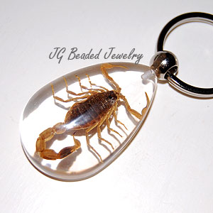 Real Scorpion Key Chain